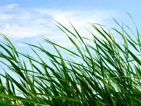 Astratto paesaggio vegetale sotto il cielo blu Archivio Fotografico - 4516507