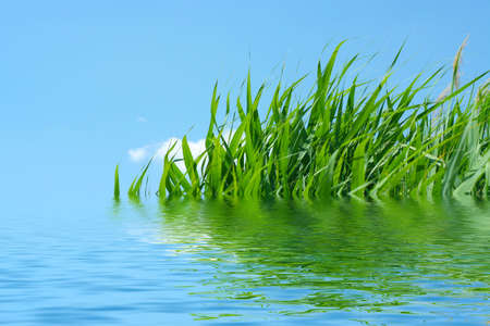 reflection green plant in surfaces of water Stock Photo - 7498822