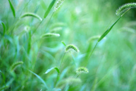 meadow Stock Photo - 7848402