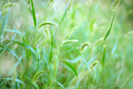 meadow Stock Photo - 7848411