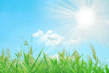 abstract scene solar sky and green grass photo