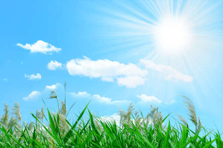 abstract scene solar sky and green grass Stock Photo - 8553329