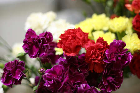 flowers as background Stock Photo - 9702113