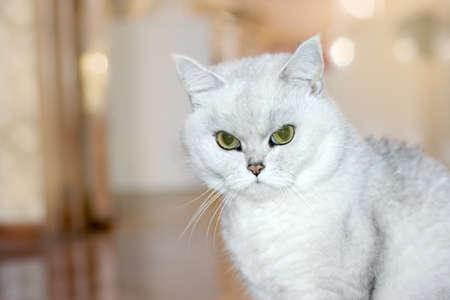 cat Stock Photo - 9492601