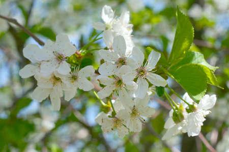 flowerses on the tree Stock Photo - 9492322