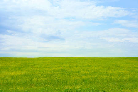 green meadow and blue sky as summer background Stock Photo - 9689568