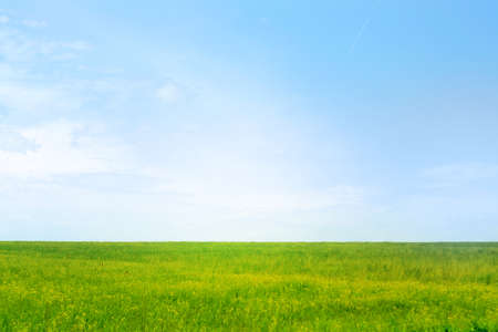 green meadow and blue sky as summer background Stock Photo - 9689553