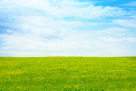 green meadow and blue sky as summer background Stock Photo - 9689559