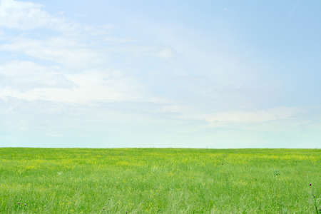 green meadow and blue sky as summer background photo