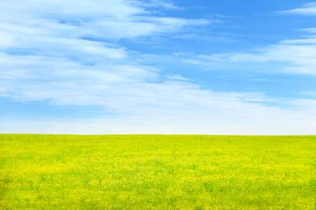 grünen Wiese und blauer Himmel als Sommer-Hintergrund Lizenzfreie Bilder