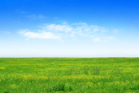 green meadow and blue sky as summer background