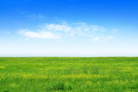 praterie: prato verde e cielo blu come sfondo l'estate Archivio Fotografico