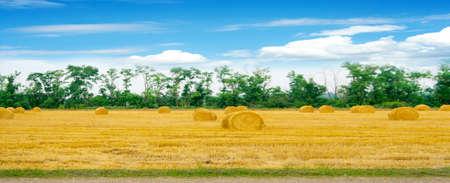 grain field Imagens