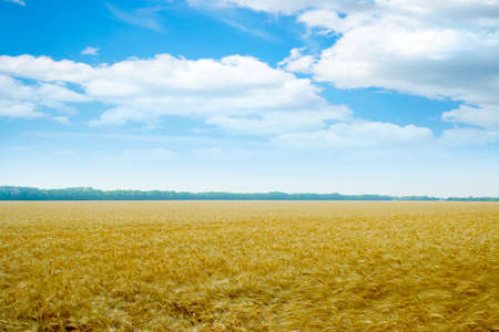 scene grain field photo