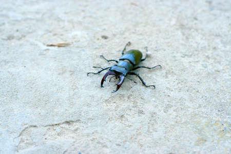 scene large bug to move on stone road photo