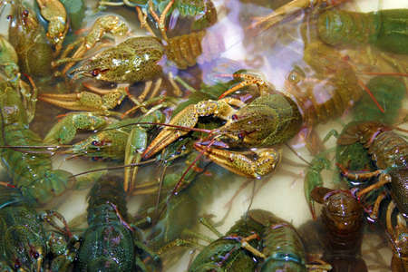 abstract river crayfish photo
