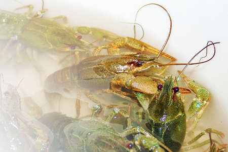 abstract scene river crayfish in water as illustration illustration