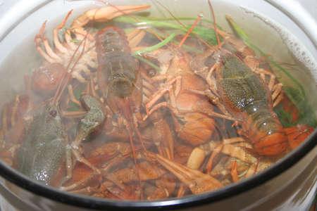 river crayfish in water as illustration illustration