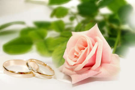 wedding band: abstract rose and wedding rings as celebration background  Stock Photo