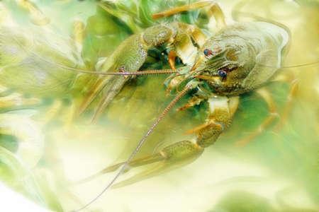 abstract scene river crayfish photo