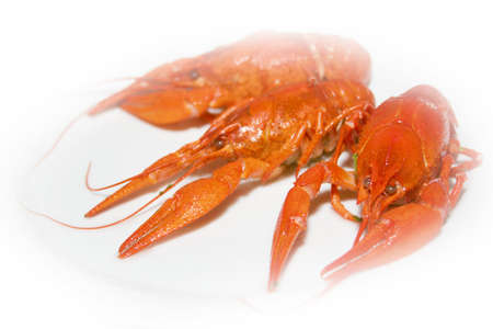 abstract red crayfish as bio food photo