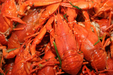 abstract scene red crayfishes as bio food  photo