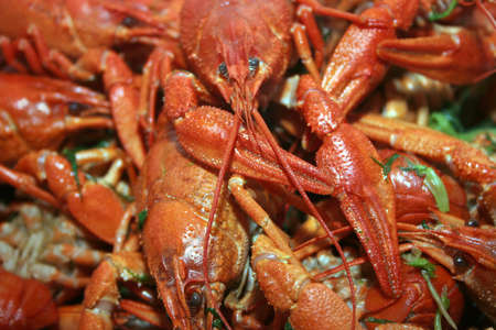 scene red crayfishes as bio food  photo