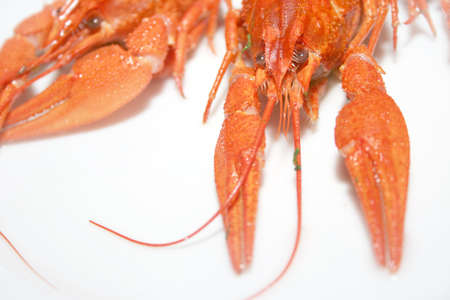 crayfishes as bio food photo