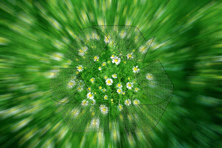flower daisywheel on meadow as symbol spring landscape photo