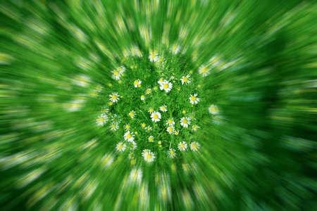 daisywheel photo