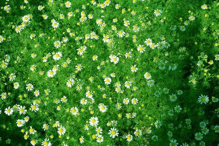 daisywheel: daisywheel