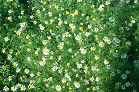 daisywheel: abstract daisywheel on meadow