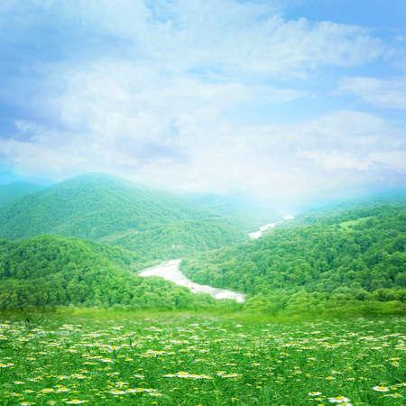daisywheel: flower daisywheel on meadow as symbol spring landscape