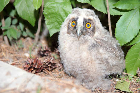 scene small owlet amongst timber plant  photo