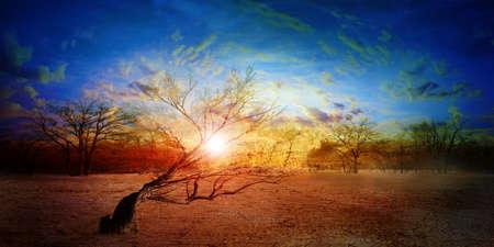 old dry tree in sand desert and celestial landscape Stock Photo - 16574971