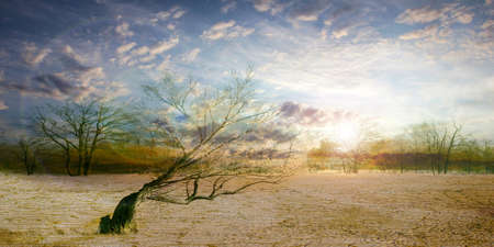 old dry tree in sand desert and celestial landscape Stock Photo - 16574974