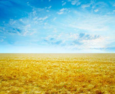 熟した小麦の太陽の空の下で農業分野