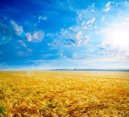 reifen Weizen auf die Landwirtschaft Feld unter solar sky