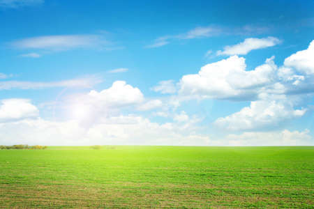 beautiful green herb on the field and celestial landscape Stock Photo - 16597421