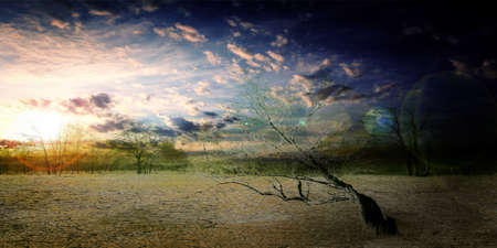 old dry tree in sand desert and celestial landscape Stock Photo - 16933684