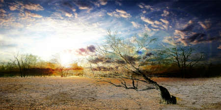 old dry tree in sand desert and celestial landscape photo