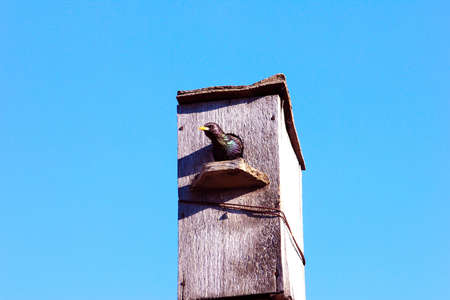 bird house for starling on background solar sky photo