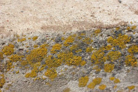 texture aging wall from cement and lichen photo