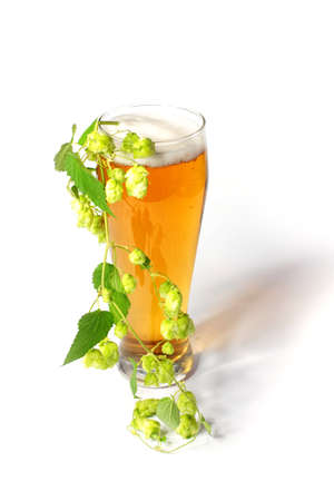 scene light beer in the glass and plant hop photo