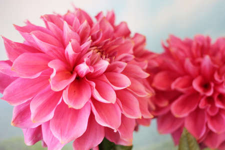 bright solar flower dahlia as symbol holiday Archivio Fotografico