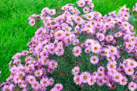 Abstracte mooie bloem als decoratie tuin royalty vrije foto