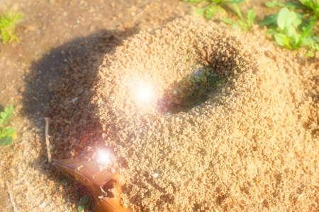 ameisenhaufen: Ameisenhaufen errichtet Holz