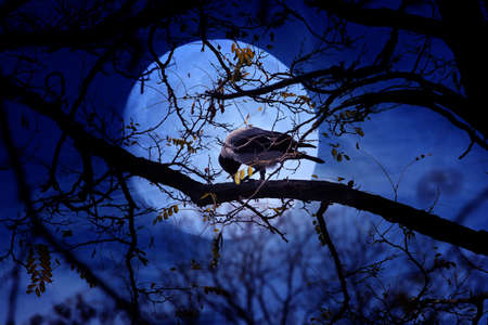 solitary crow sits on branch old tree photo