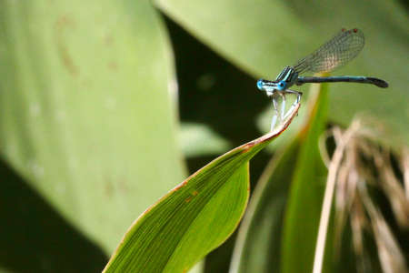 blue dragon-fly and pale green grass background photo