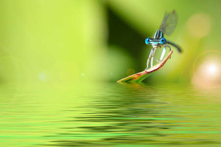 little blue dragon-fly and pale green grass background photo